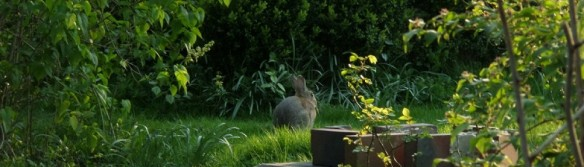 cropped-hase.jpg