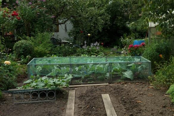 Gemüseschutz