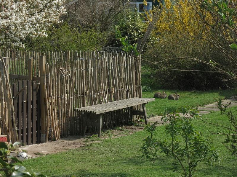 Schutz vor Kaninchen | Gärtnern in Bremen