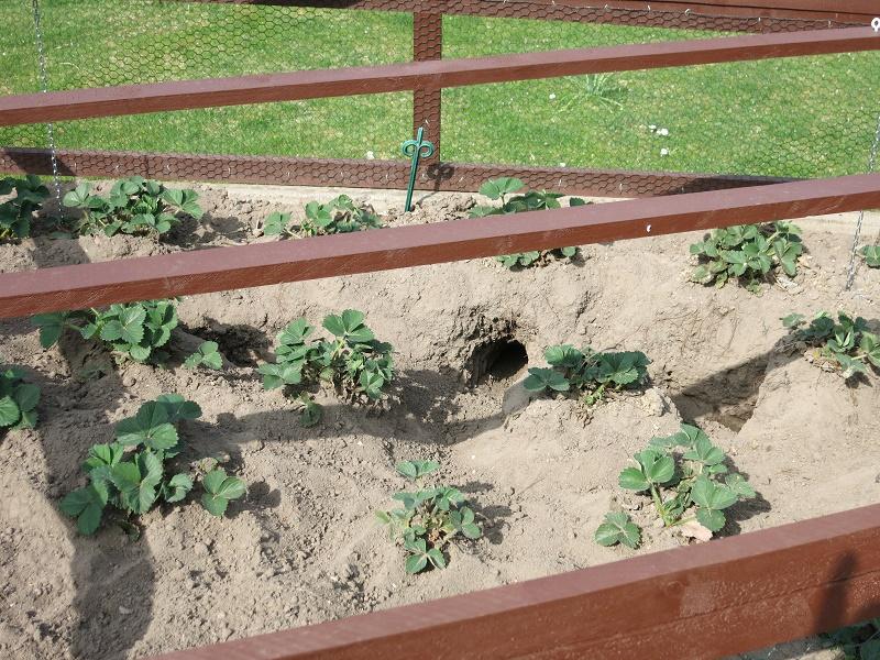 Kaninchen im Garten | Gärtnern in Bremen